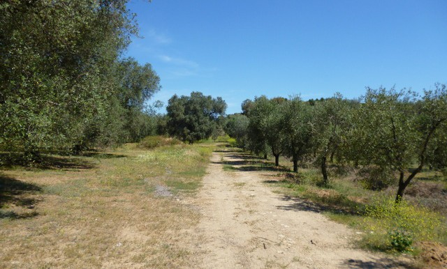 driveway to the lands