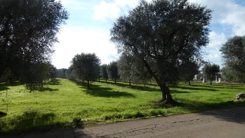 Terreno uliveto in vendita, di circa 9.000 metri quadrati