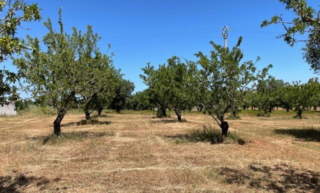 Terreno vista mare in vendita a Carovigno, Serranova